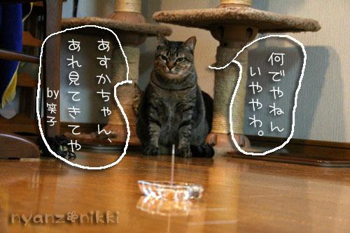 猫にも、お香_d0355333_14553601.jpg