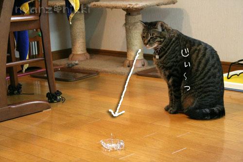 猫にも、お香_d0355333_14553639.jpg