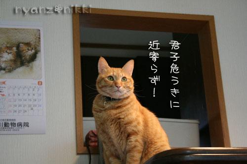 猫にも、お香_d0355333_14553641.jpg
