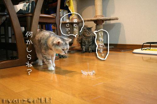 猫にも、お香_d0355333_14553651.jpg
