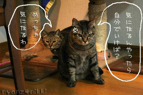 猫にも、お香_d0355333_14553662.jpg