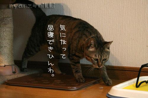 猫にも、お香_d0355333_14553678.jpg