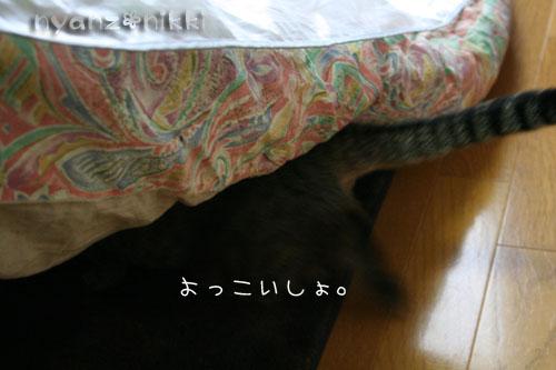 猫にも、お香_d0355333_14553776.jpg