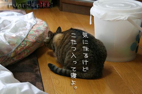 猫にも、お香_d0355333_14553779.jpg