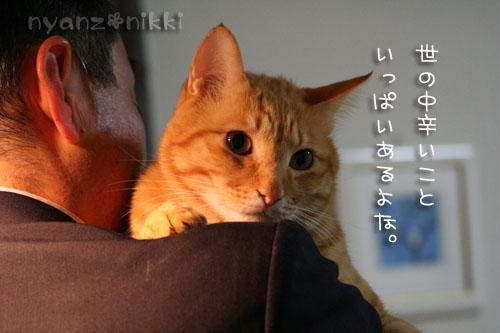 いやしい猫じゃなくて、癒し猫。_d0355333_14561296.jpg