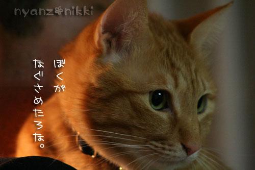 いやしい猫じゃなくて、癒し猫。_d0355333_14561297.jpg