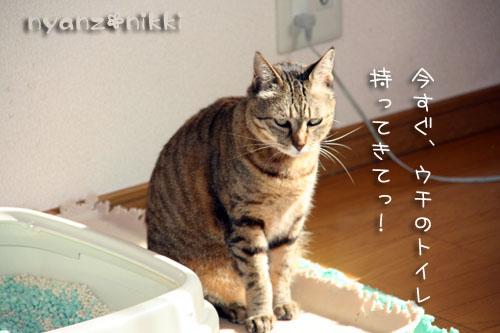 笑子ちゃんのこだわり_d0355333_14565080.jpg