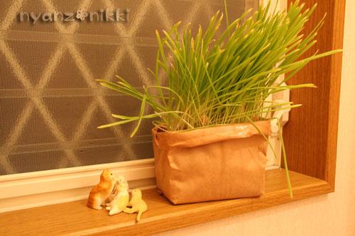 猫草が育ちましたよ_d0355333_14571895.jpg