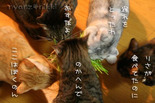 猫草が育ちましたよ_d0355333_14571917.jpg