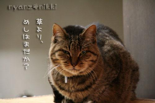 猫草が育ちましたよ_d0355333_14571964.jpg