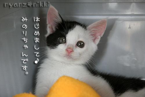 みのりちゃんが来ました♪_d0355333_15022523.jpg