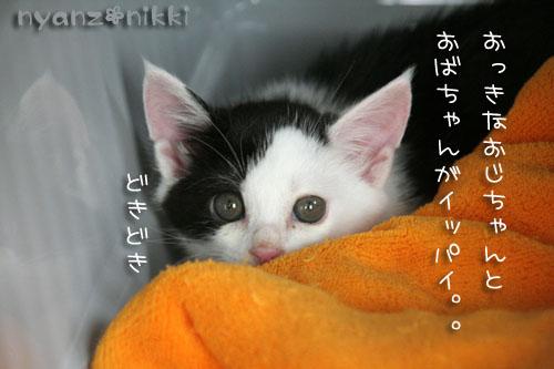 みのりちゃんが来ました♪_d0355333_15022684.jpg