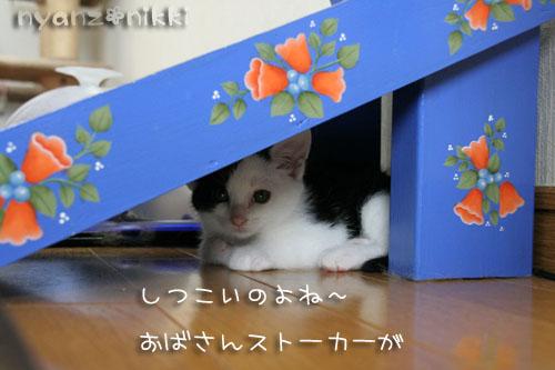 みのりちゃん里親さん募集開始!_d0355333_15024534.jpg