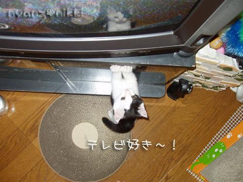 みのりちゃんの近況♪_d0355333_15025436.jpg