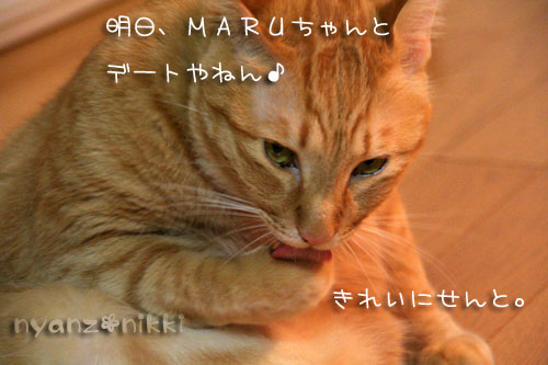 富士山とお手伝いにゃん友さん_d0355333_15032271.jpg