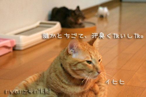 富士山とお手伝いにゃん友さん_d0355333_15032356.jpg