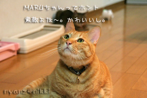 富士山とお手伝いにゃん友さん_d0355333_15032373.jpg