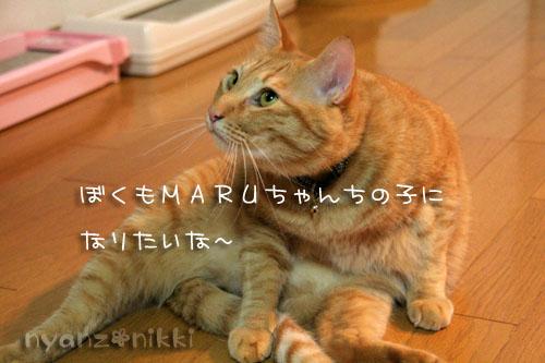 富士山とお手伝いにゃん友さん_d0355333_15032404.jpg
