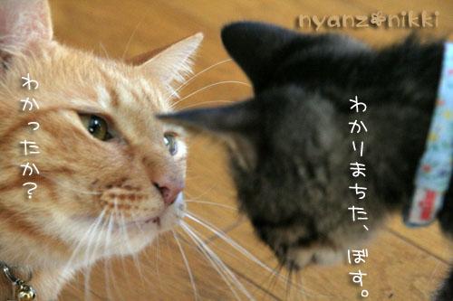 忍者デビュー☆_d0355333_15042915.jpg