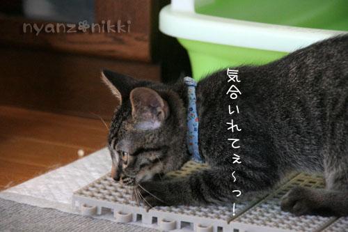忍者デビュー☆_d0355333_15043043.jpg