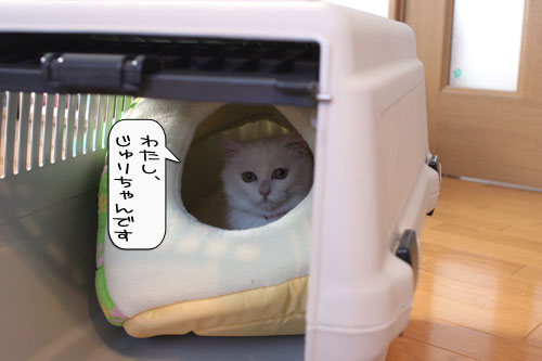 樹理ちゃんお預かり~_d0355333_16360703.jpg