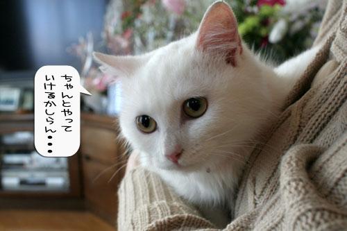樹理ちゃんお預かり~_d0355333_16360864.jpg