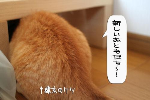 樹理ちゃんお預かり~_d0355333_16360867.jpg