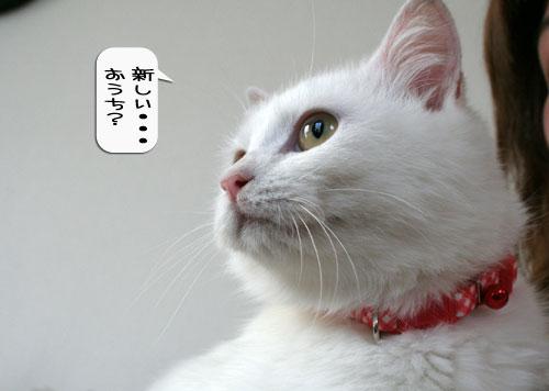 樹理ちゃんお預かり~_d0355333_16360878.jpg