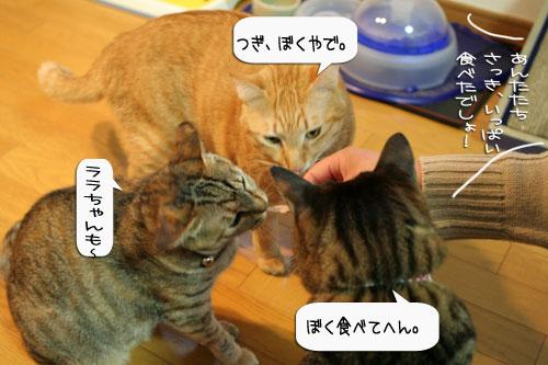 樹理ちゃんお預かり~_d0355333_16361087.jpg