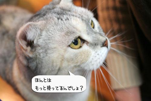 樹理ちゃんお預かり~_d0355333_16361145.jpg