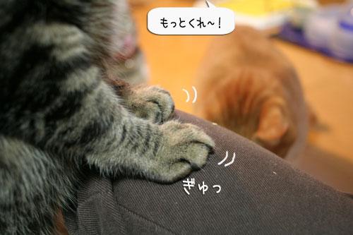 樹理ちゃんお預かり~_d0355333_16361182.jpg