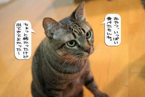 樹理ちゃんお預かり~_d0355333_16361183.jpg