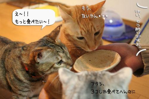 樹理ちゃんお預かり~_d0355333_16361240.jpg