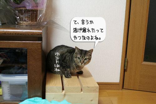 樹理ちゃんお預かり~_d0355333_16361293.jpg