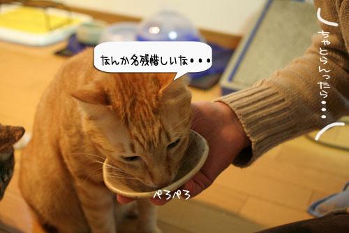 樹理ちゃんお預かり~_d0355333_16361303.jpg