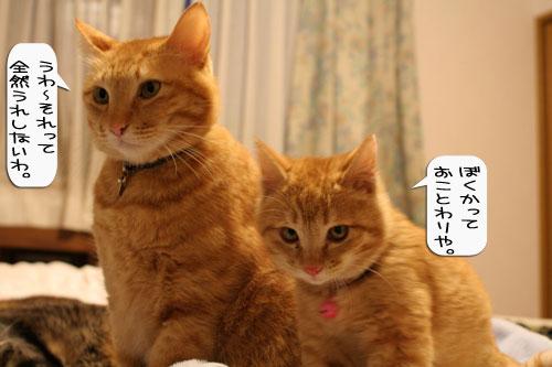 樹理ちゃんお預かり~_d0355333_16361421.jpg