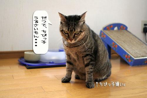 子猫もうっとり★ちゃとらん動画つき_d0355333_16364015.jpg