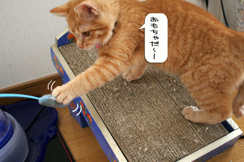 子猫もうっとり★ちゃとらん動画つき_d0355333_16364018.jpg