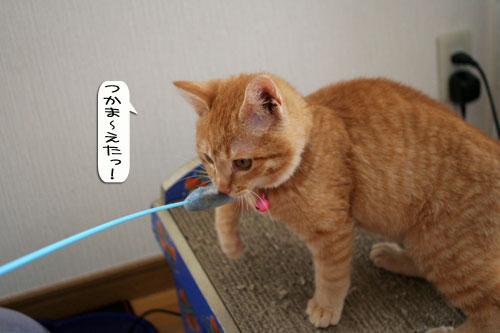 子猫もうっとり★ちゃとらん動画つき_d0355333_16364039.jpg