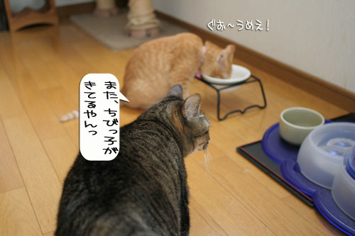 子猫もうっとり★ちゃとらん動画つき_d0355333_16364046.jpg