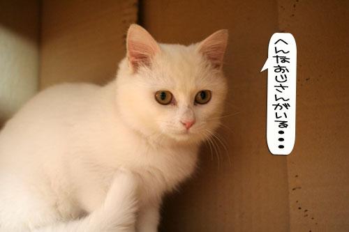 子猫もうっとり★ちゃとらん動画つき_d0355333_16364053.jpg