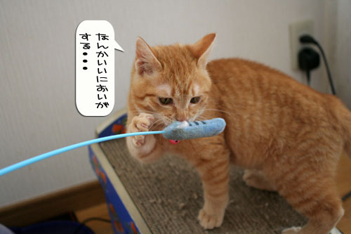 子猫もうっとり★ちゃとらん動画つき_d0355333_16364054.jpg
