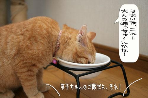 子猫もうっとり★ちゃとらん動画つき_d0355333_16364072.jpg