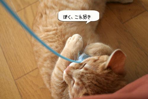子猫もうっとり★ちゃとらん動画つき_d0355333_16364119.jpg