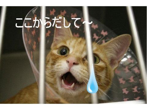猫とお線香の関係&幸せ報告_d0355333_16364423.jpg