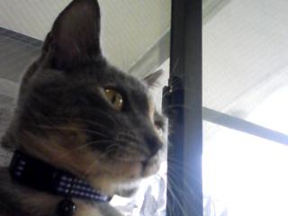猫とお線香の関係&幸せ報告_d0355333_16364493.jpg