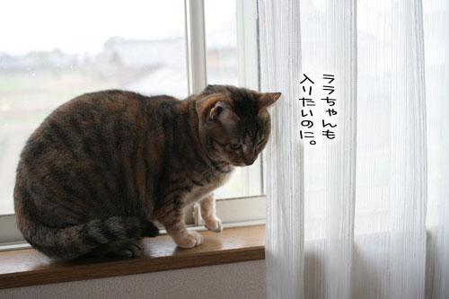 猫とお線香の関係&幸せ報告_d0355333_16364502.jpg