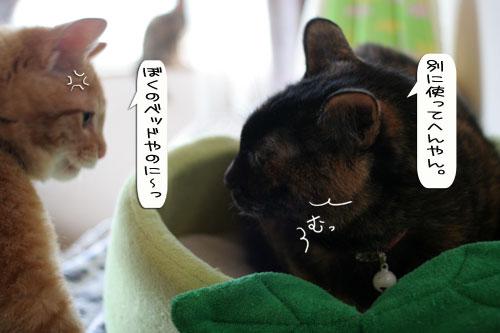 猫とお線香の関係&幸せ報告_d0355333_16364532.jpg