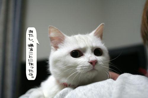 猫とお線香の関係&幸せ報告_d0355333_16364577.jpg