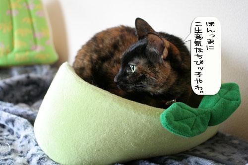 猫とお線香の関係&幸せ報告_d0355333_16364588.jpg